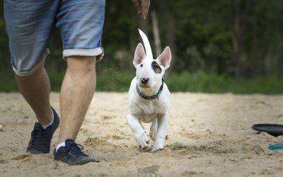 posłuszeństwo dla psów