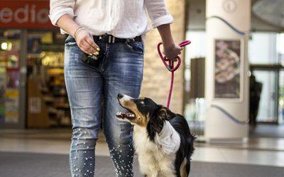 szkolenie psów galeria wisła