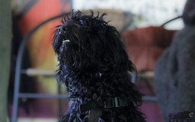 szkolenie psów płock 2