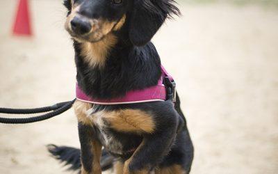 szkolenie psów płock 4